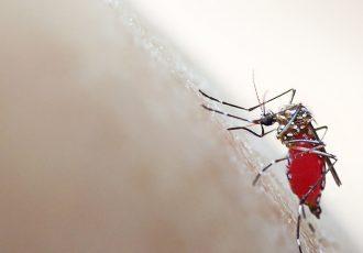 West Nile Virus Treatment